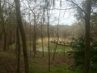 Far beyond the trees, flowers, rocks and greenery rests the Kanapaha Lake, which is where the garden received its name.